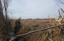 Denuncian a un vecino de Linyola por talar 12 árboles de una acequia