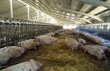 Ramaders tallen la C-14 a Ponts contra la limitació o el veto a noves granges