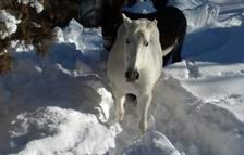Aran suspende la temporada de caza diez días antes por la acumulación de nieve