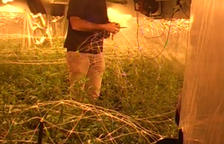 Macrooperació amb un detingut i una plantació a l'Alt Urgell