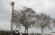Endesa trasllada un niu cigonya d'una torre elèctrica a un arbre pròxim