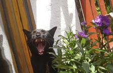 Els beneficis dels badalls