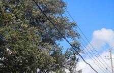 Denunciada una eléctrica en Àger por tener unos cables cerca de la vegetación