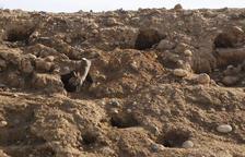 Capturen conills amb gàbies a l'aeroport d'Alguaire al posar en risc la seguretat