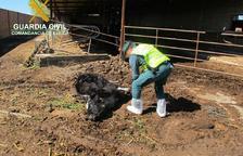 El ramader de Torregrossa ja va ser denunciat per l'ajuntament