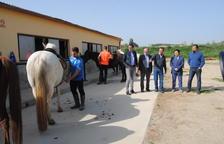 Mollerussa, sede de un campeonato ecuestre con más de 200 caballos