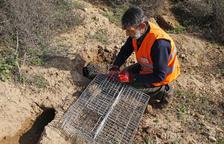 Capturats 250 conills al costat de l'aeroport per seguretat