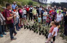Vallbona planta encinas para regenerar un bosque quemado