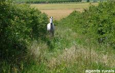 Expedientan a dos vecinos de Algerri por tener caballos en mal estado