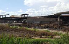 Linyola denuncia un ramader per abocament de purins en una séquia local