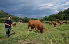 Immobilitzades 9 granges de Pallars i l'Alt Urgell per tuberculosi bovina