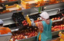 Fruits de Ponent alcanzará los 500 trabajadores esta campaña