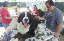 Un donativo garantiza las sesiones de terapia canina de L'Espígol de Cervera