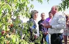 Fruits de Ponent prevé despidos por la caída de cosecha por el pedrisco