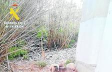 Roban 184 corderos en el Baix Cinca