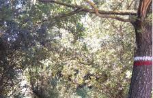 Treballs per desbrossar vies d'interès comarcal al Solsonès