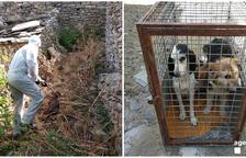 Traslladen 4 gossos a la gossera de Tremp al morir la propietària
