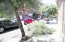 Un árbol caído en La Bordeta por la tormenta del viernes