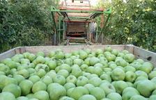 """UP ve """"mínima"""" la subida de precios de la fruta pese a caer la cosecha"""