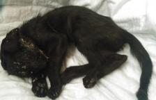 Denuncien la mort d'un gat per abandó