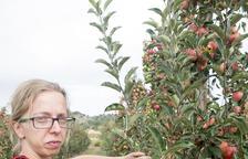 Sanaüja produce 40 toneladas de manzana con al Segarra-Garrigues