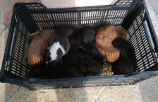 Abandonen set cadells en un restaurant de les Avellanes