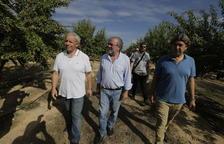 El riego avanza 2 años la producción del almendro y la multiplica por 10