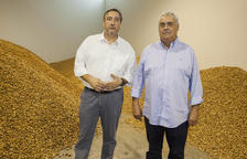 Ametlles Vicens preveu arribar a les cent hectàrees d'ametllers a finals d'aquest any