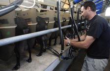 El sector de la llet de cabra impulsa un segell de qualitat
