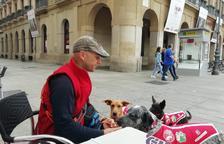 Cinco perros inician el Camino de Santiago en busca de familia