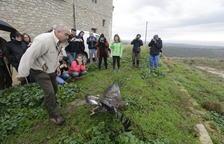 Alliberen una àguila daurada a la reserva de Mas de Melons