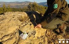 Espolien fòssils amb una radial a Santa Engràcia, nucli de Tremp