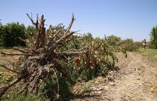 El preu de l'hectàrea de fruiters cau 539 € en un any per la crisi del sector