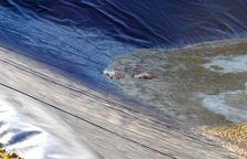 Moren tres gossos de caça atrapats en una bassa de reg a Castelldans
