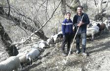 Padrins d'ovelles del Pallars