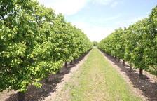 Els pagesos hauran de pagar 50 euros per hectàrea i any per promocionar la fruita