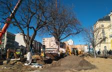 Gran expectació pel trasplantament dels dos arbres davant l'estació de Lleida