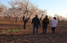 Les Garrigues estrena la campaña de las rutas turísticas por los campos de almendros en flor