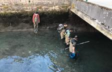 Rescatan 780 peces del Garona por obras en una central eléctrica